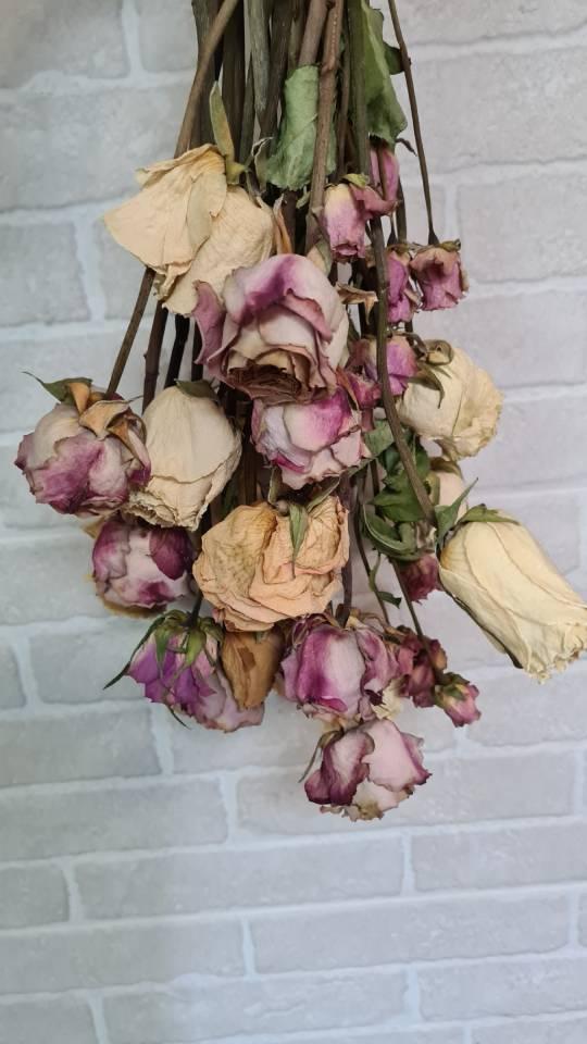 Secar rosas tallos